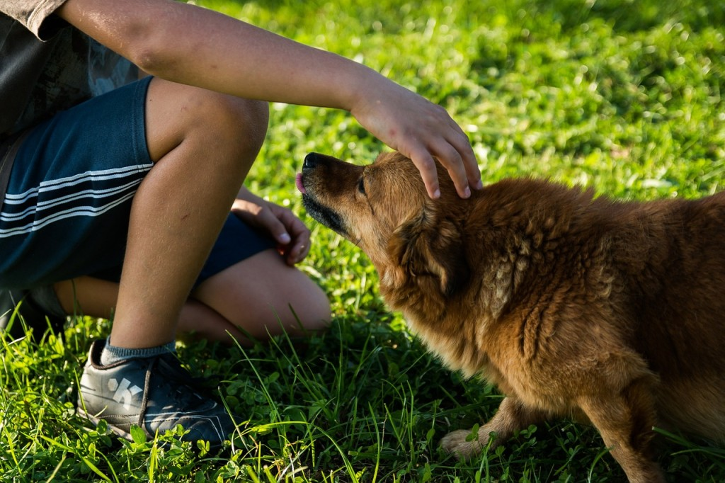 Hitting the dog park with your cute pooch is one of many alternative ways to find the one