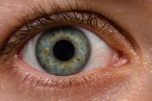 1200px-human_eye_with_blood_vessels